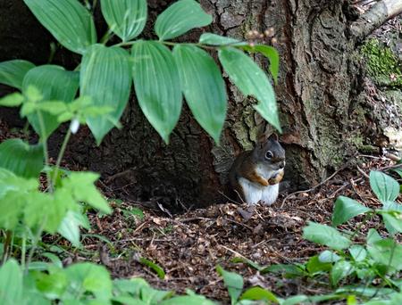 sitting on the ground: Chipmunk Visit