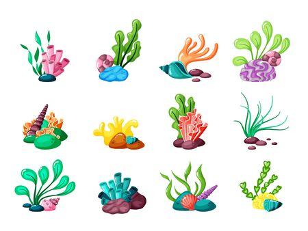 수중 식물. 바다 또는 바다 생활 열대 라미나리아 이국적인 잎에서 나온 해초와 조개. 벡터 세트