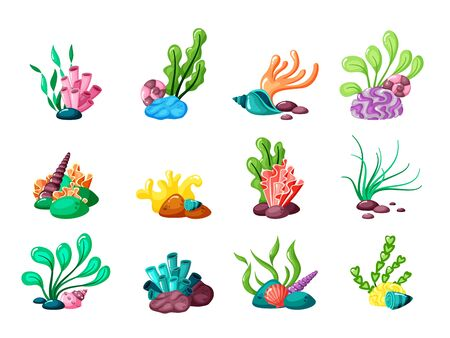 underwater plants. seaweed and seashells from ocean or sea life tropical laminaria exotic leaves in aquarium. vector set