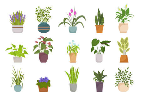 Houseplants in pots set. Botanical collection with colorful flowers leaves natural decorative design tropical thickets diverse natural form home and office interiors. Vector floristic.