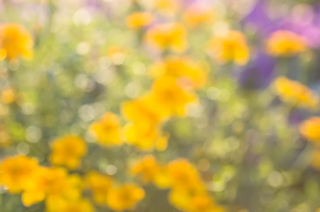 brightly: Blurred abstract background multicolored flower field brightly lit