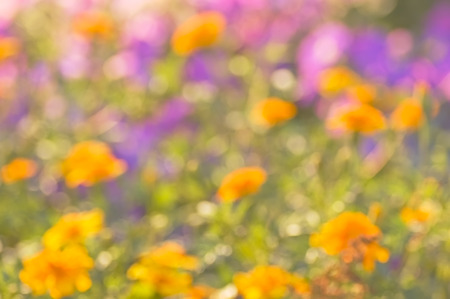 brightly lit: Blurred abstract background multicolored flower field brightly lit