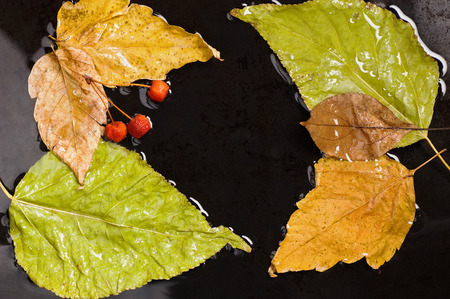 yields: Several autumn fallen leaves and wild apples floating into water on black surface Stock Photo