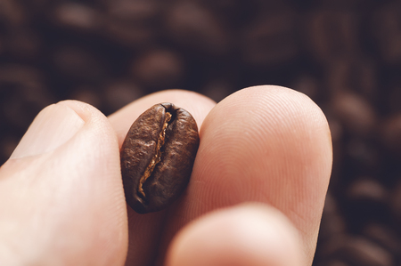 seeds coffee: Close-up of fingers showing roasted coffee bean with blurred other beans scattered behind