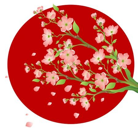 ramo di ciliegio: Ramo verde di un Oriental cherry