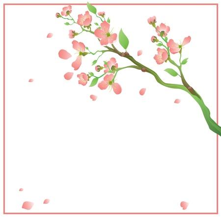 Green branch of an Oriental cherry