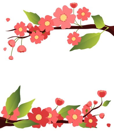 apricot tree: sakura