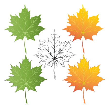 vector set of summer and autumn maple leaves