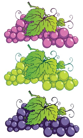 Bunch of grapes with leaves Illustration