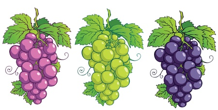 red grape: Bunch of grapes with leaves Illustration