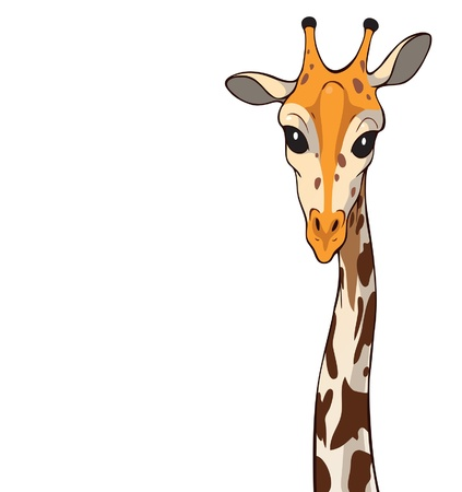 Illustration of a giraffe with a slender, long neck.  Stock Vector - 14741085