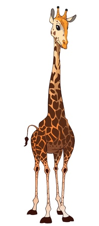 Illustration of a giraffe with a slender, long neck.