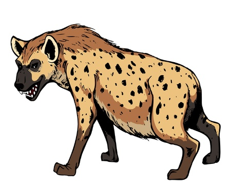 hyena: Hyena. Africa animal, isolated on white background.vector illustration