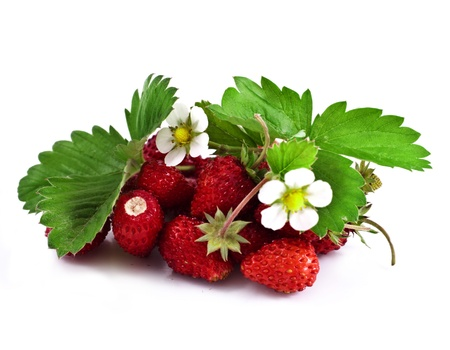 Wild strawberry with flower  Stock Photo - 20853382