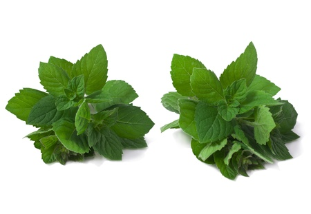 Fresh green mint isolated on white Stock Photo - 21005554