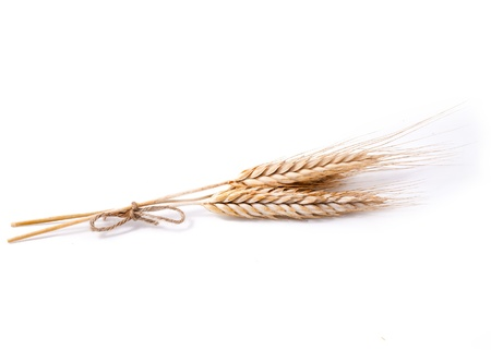 wheat ears on white background Stock Photo - 22013592