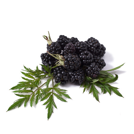 Sweet blackberries isolate on white Stock Photo - 23060527