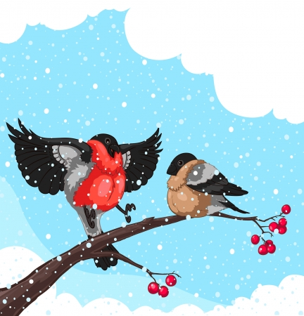 Two Bullfinch on a branch of rowan isolated on white background  Illustration