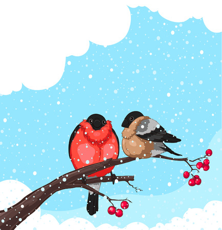 red berries: Two Bullfinch on a branch of rowan isolated on white background  Illustration