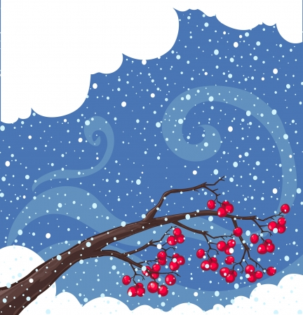 rowan tree: Winter background with snow-covered  tree branches, rowan berry