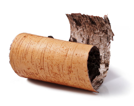 birch bark isolated on a white