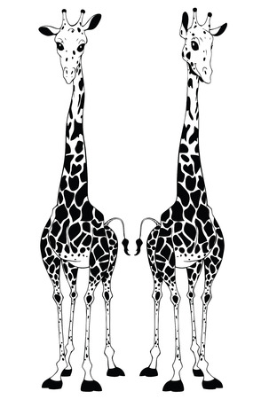 Illustration of a giraffe with a slender, long neck   Stock Photo