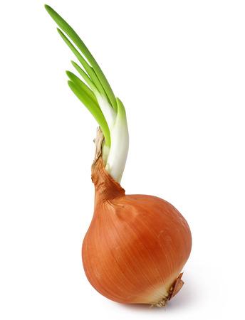 Ripe onion on a white background  Stock Photo