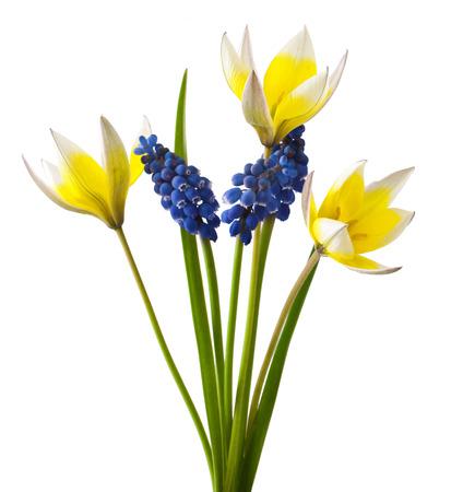 globose fruits: fresh flowers bouquet on a White Background  Stock Photo