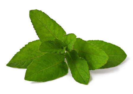 mint isolated on a white background