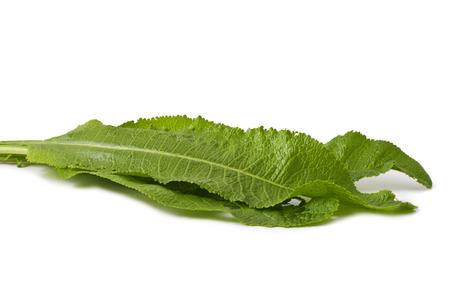 leaves horseradish isolated on white  Stock Photo