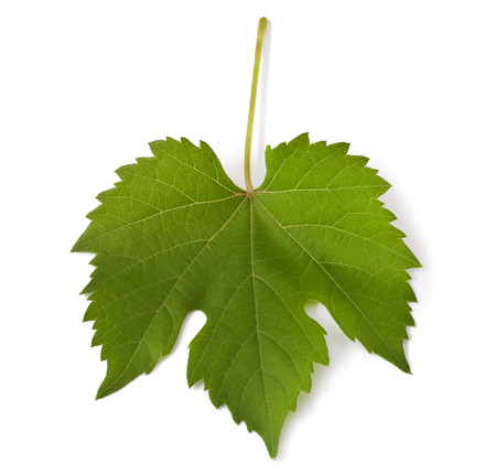 Grape leaf   Isolated on white  Stock Photo