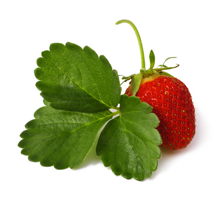 Strawberries with leaves  Isolated on a white background