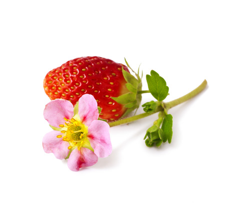 Strawberries with flower on a white background   photo