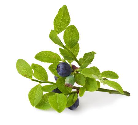 ripe fresh blueberry on a white background