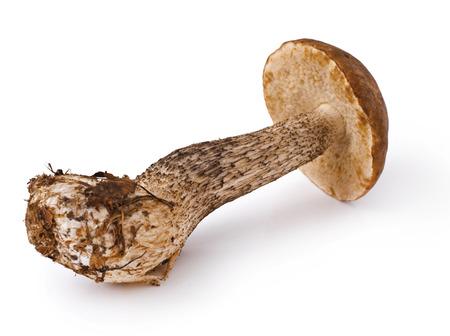 fresh boletus mushroom isolated on white background