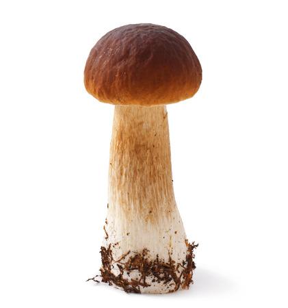 Boletus mushroom isolated on white background