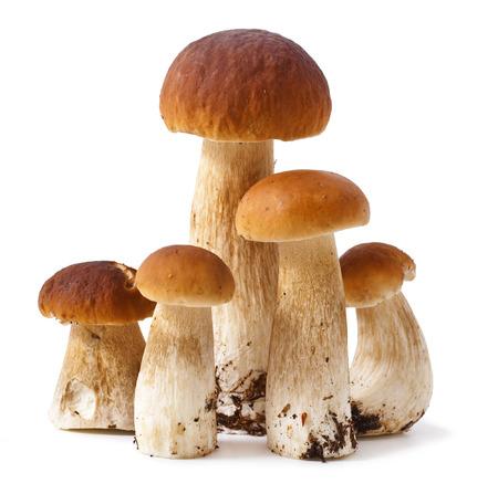 boletus mushroom: Group boletus mushroom isolated on white background