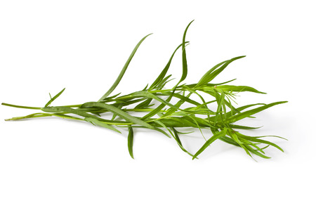fresh tarragon herb isolated on a white background Stock Photo