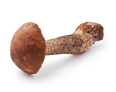 boletus mushroom: fresh boletus mushroom isolated on white background