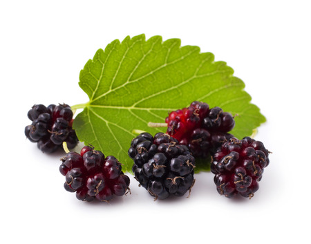 Ripe fresh Mulberry on a white background photo