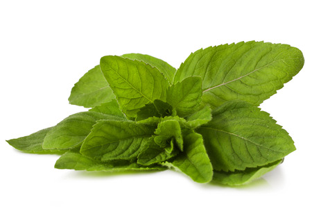Mint isolated on a white background Stock Photo