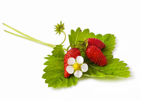 Wild strawberry with flower isolated on white background photo