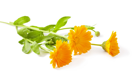 freigestellt: Calendula flowers isolated on white background Stock Photo