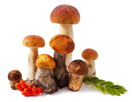 Mushrooms and rowanberry isolated on a white background