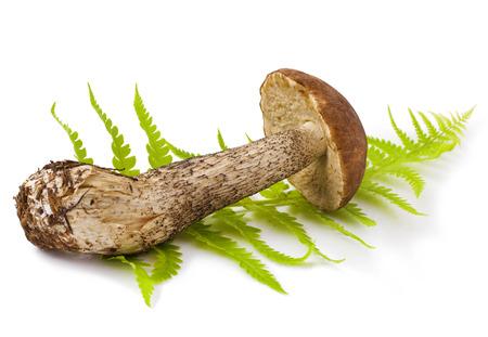 fresh boletus mushroom on green Fern isolated on white background Stock Photo