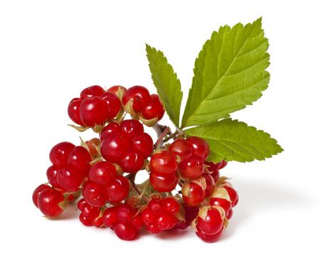 rubus: Ripe Stone Bramble berry Rubus saxatilis isolated on white background