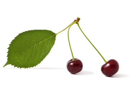 Two red cherry on a white background