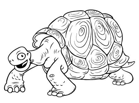 schildkroete: Karikatur-Schildkröte auf weißem Hintergrund Lizenzfreie Bilder