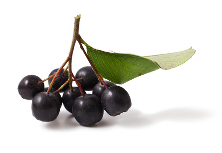 bacca: Black chokeberry on a white background. aronia