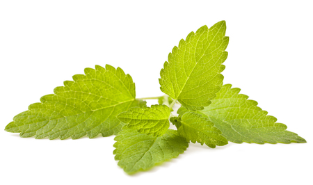 Lemon melissa, mint leaves isolated on a white background.